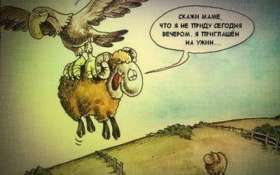 Овцы выстроились в очередь