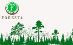 Forest4 отзывы о перспективном хайпе